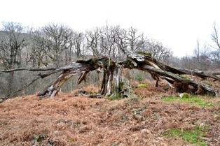 Glen Trool tree