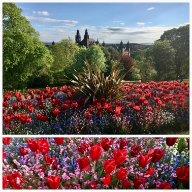 Kelvingrove and University tulips