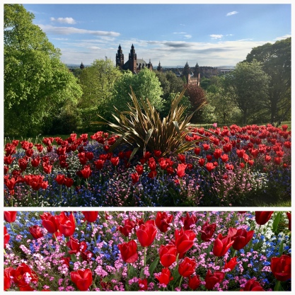 Kelvingrove and University tulips