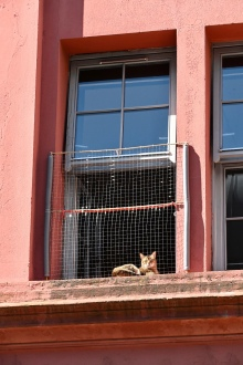 Orient Buildings and cat