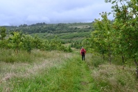 Torrance Trail