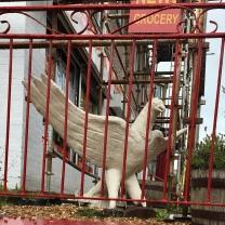 Captive eagle?