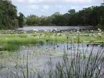 Barretts Lagoon