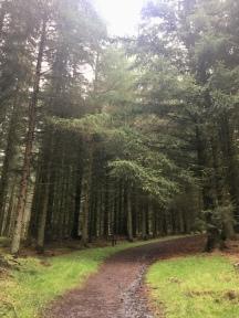 Drimmie Wood