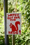 Watch out for the reds!
