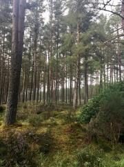 North Wood