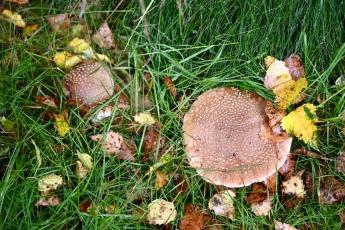 North Wood fungi