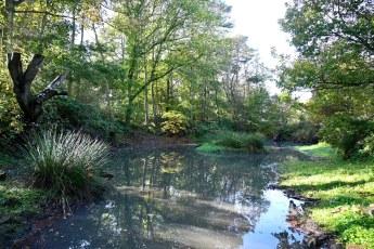 Innergellie Woodland