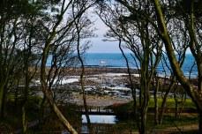 Fife coast at Cambo