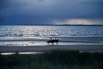 Horses on Largo Bay at dusk
