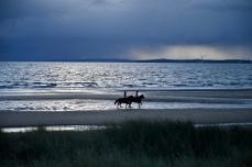 Horses on Largo Bay at dusk