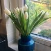 Tulips from astranger