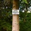 TreeSquare