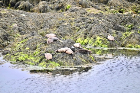 Seals on the Golden Road