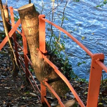 Fence/tree hybrid