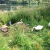 Durrockstock Park swans